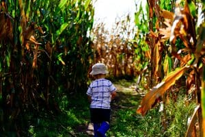 A child runs through the corn maze at Linder Farms in Kuna.